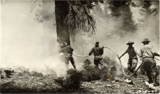 1933 Fire in Sutro Forest, San Francisco