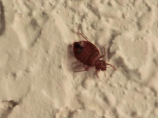 A bug at Heritage Marina Hotel in San Francisco