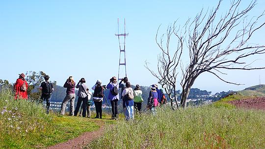 The Migrating Birds of Mount Davidson